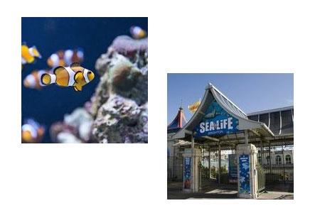 sealife1-1