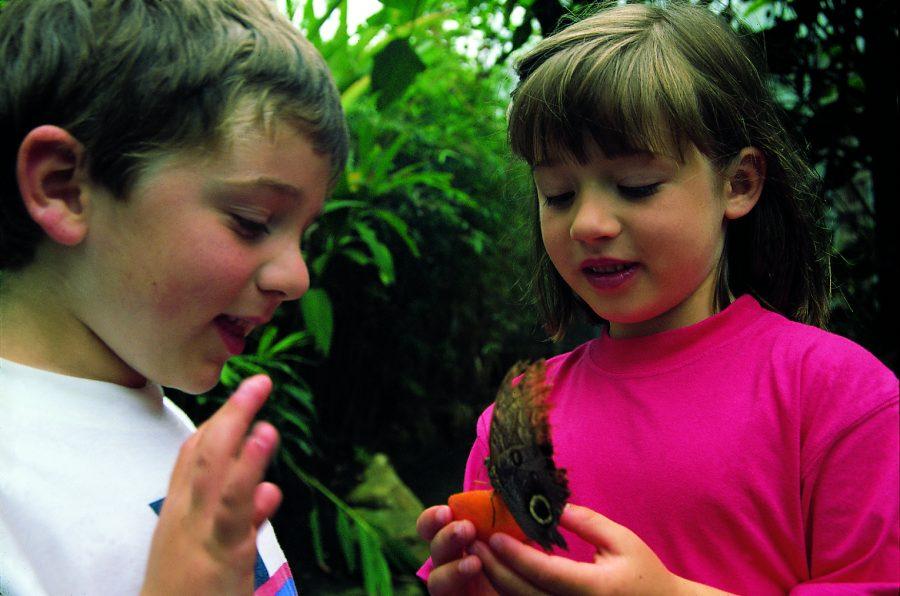 stratford-butterfly-farm